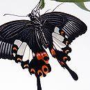 букет из бабочек2