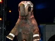 slon-v-arendu