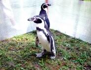 pingviny-na-prazdnik