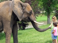 zakazat-slona